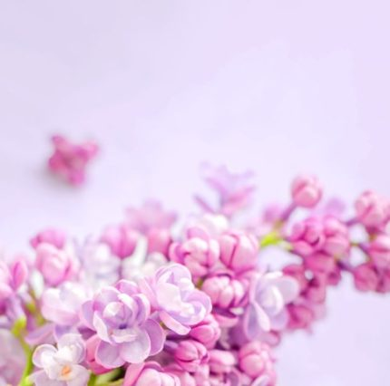 flowers-banner-large